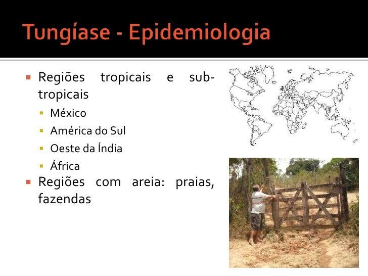 Tungíase - Epidemiologia<br />Regiões tropicais e sub-tropicais<br />México<br />América do Sul<br />Oeste da Índia<br />Á...