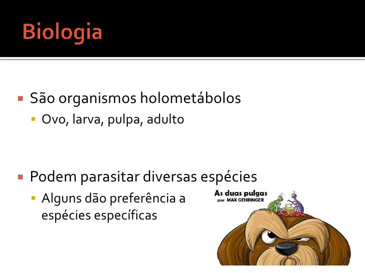 Biologia <br />São organismos holometábolos<br />Ovo, larva, pulpa, adulto<br />Podem parasitar diversas espécies <br />Al...
