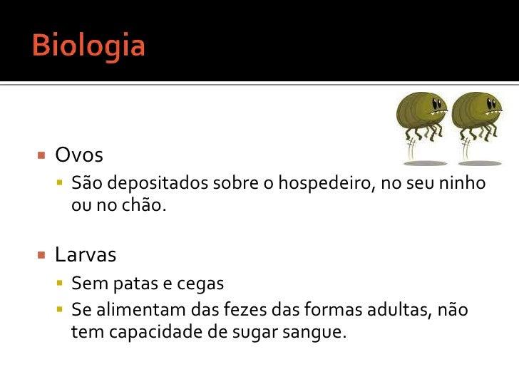 Biologia <br />Ovos <br />São depositados sobre o hospedeiro, no seu ninho ou no chão.<br />Larvas <br />Sem patas e cegas...