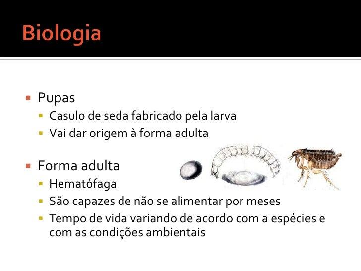 Biologia <br />Pupas <br />Casulo de seda fabricado pela larva<br />Vai dar origem à forma adulta<br />Forma adulta<br />H...