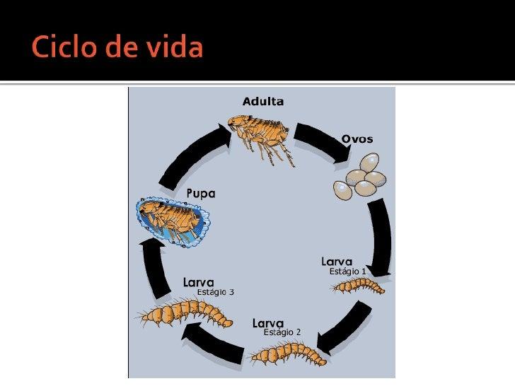 Ciclo de vida <br />