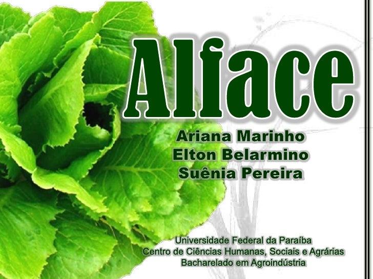 Alface<br />Ariana Marinho<br />Elton Belarmino<br />Suênia Pereira<br />Universidade Federal da Paraíba<br />Centro de Ci...