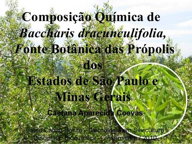 Composição Química de Baccharis dracunculifolia,Fonte Botânica das Própolis            dos  Estados de São Paulo e      Mi...