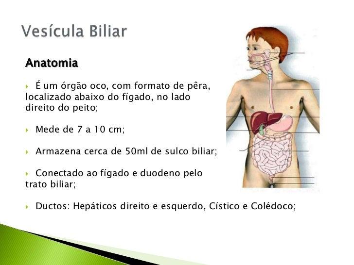 Fisiologia - Vesícula Biliar