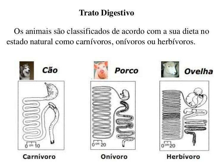 Seminário fisiologia