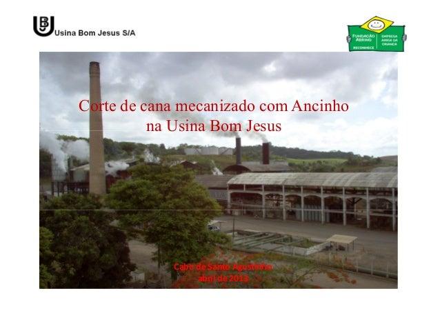 Corte de cana mecanizado com Ancinhona Usina Bom JesusCabo de Santo Agostinhoabril de 2013