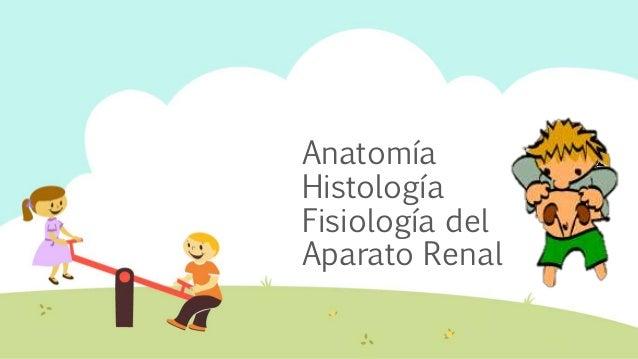 Semiología del aparato urinario / PEDIATRÍA