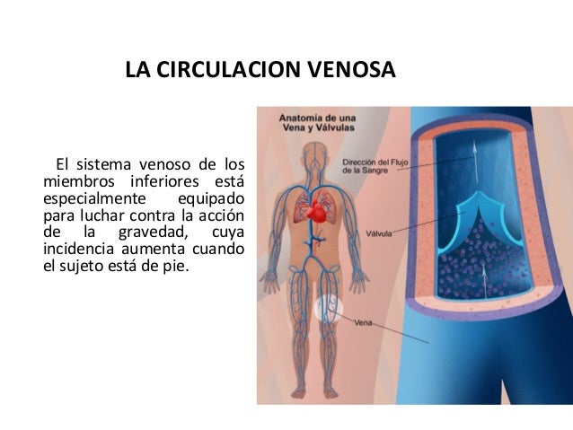 patologia del Sistema Vascular periférico