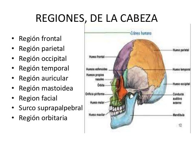 La osteocondrosis koreshkovyy el síndrome las revocaciones