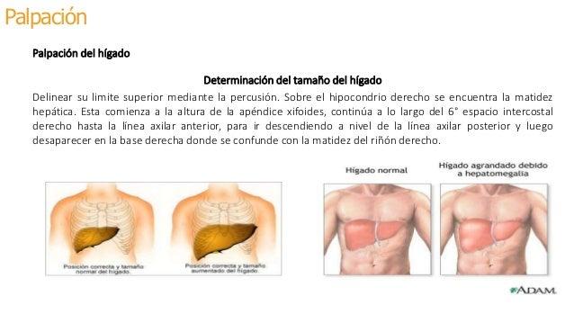 Semiologia de abdomen