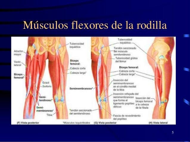 Semiologia de la rodilla