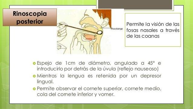 ESTRUCTURAS DE LA FARINGE  EXPLORACION:  Mucosa de los labios  Dientes  Lengua: tamaño, movilidad, superficie  Conduc...
