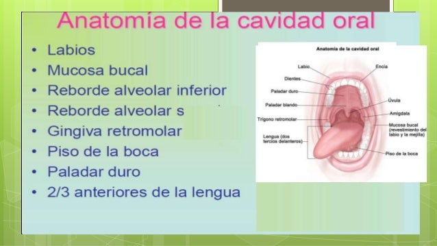 Concepto Es la infección de la piel del conducto auditivo externo. Se puede clasificar en dos grandes grupos: • Agudas: co...
