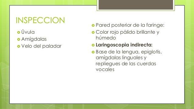 Otitis Externa Aguda Difusa • La otitis externa bacteriana difusa supone la inflamación del CAE en toda su extensión, por ...