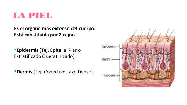 SEMIOLOGIA DE LA PIEL Y ANEXOS EBOOK