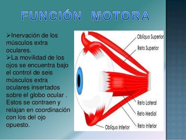  Aproximar una fuente de luz de intensidad mediana a ambos ojos, evaluar: Tamaño Midriasis Bilateral Anisocoria : Proceso...