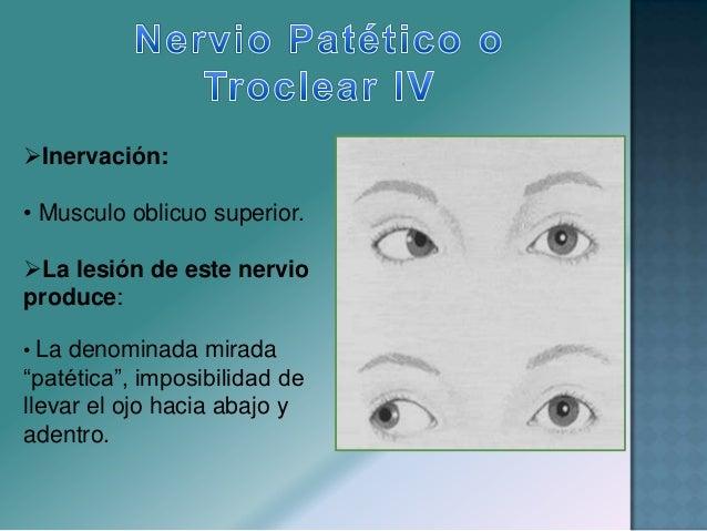 Reflejo Fotomotor : • Miosis pupilar en respuesta a estímulos luminoso, aplicado a cada ojo.