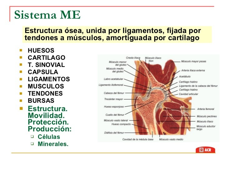 Semiologia Sistema Músculo-Esquelético
