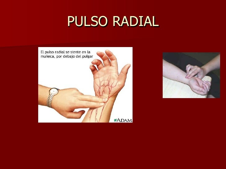 PULSO RADIAL