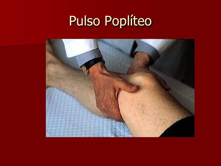 INGURGITAMENTO E PULSAÇÕES          DAS VEIAS JUGULARES  Pulso venoso reflete a dinâmica do   coração direito.  Fluxo re...