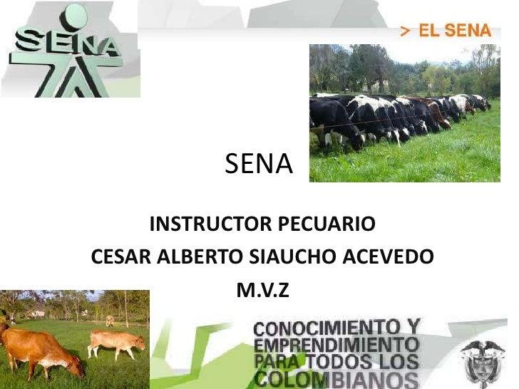 SENA     INSTRUCTOR PECUARIOCESAR ALBERTO SIAUCHO ACEVEDO            M.V.Z