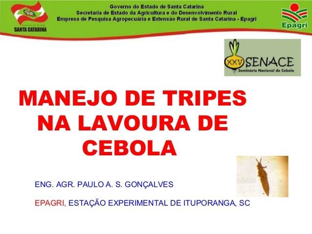 MANEJO DE TRIPES NA LAVOURA DE CEBOLA ENG. AGR. PAULO A. S. GONÇALVES EPAGRI, ESTAÇÃO EXPERIMENTAL DE ITUPORANGA, SC