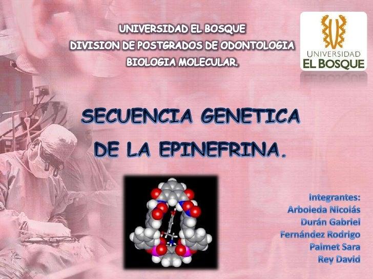 UNIVERSIDAD EL BOSQUE<br />DIVISION DE POSTGRADOS DE ODONTOLOGIA<br />BIOLOGIA MOLECULAR.<br />SECUENCIA GENETICA DE LA EP...