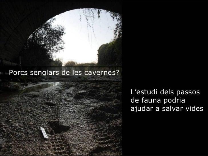 Porcs senglars de les cavernes?                                  L'estudi dels passos                                  de ...