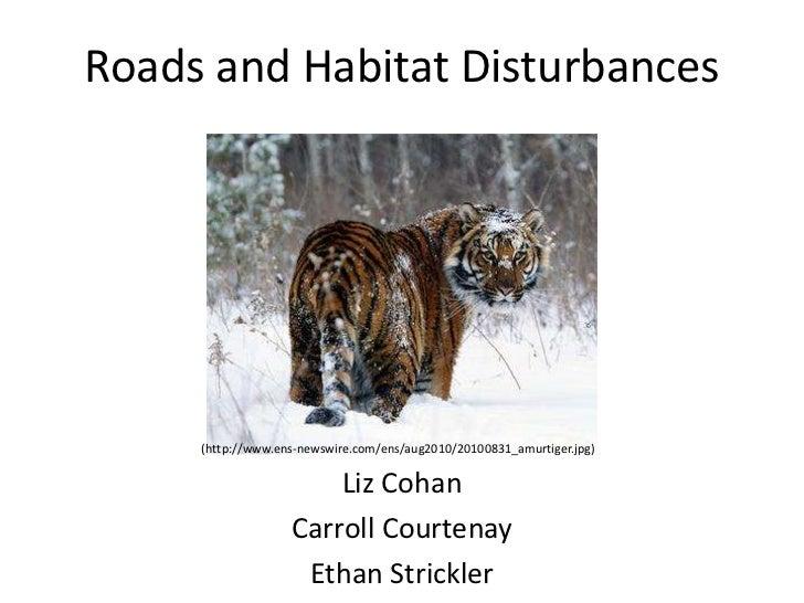 Roads and Habitat Disturbances     (http://www.ens-newswire.com/ens/aug2010/20100831_amurtiger.jpg)                       ...