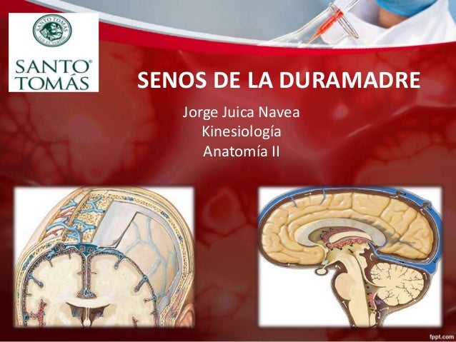 SENOS DE LA DURAMADRE Jorge Juica Navea Kinesiología Anatomía II