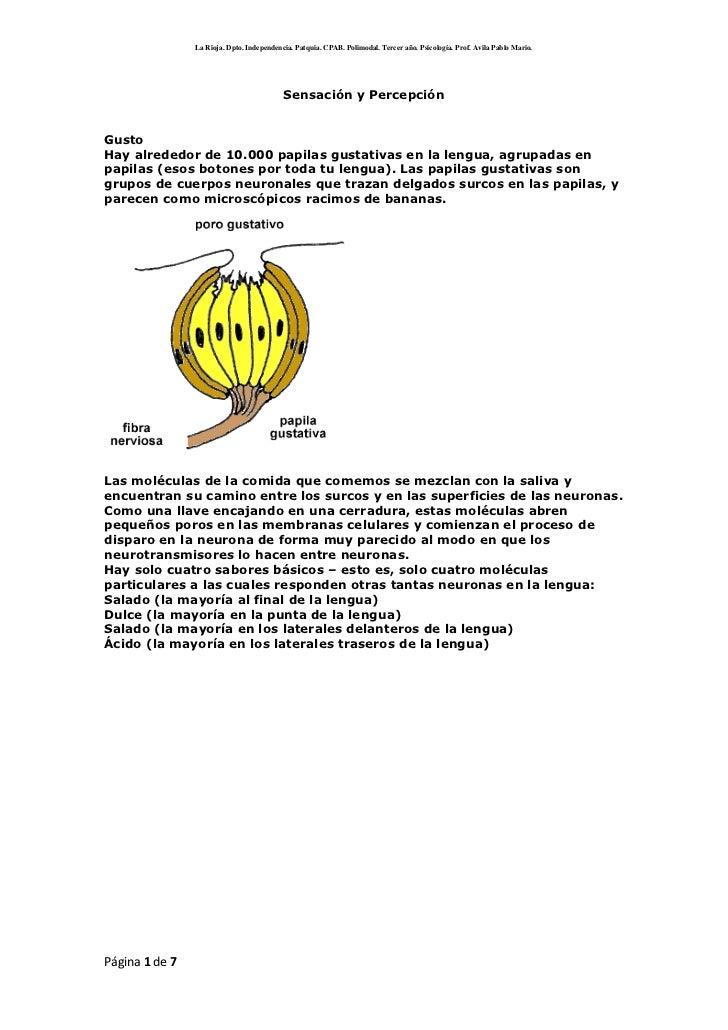 Sensación y Percepción<br />GustoHay alrededor de 10.000 papilas gustativas en la lengua, agrupadas en papilas (esos boton...