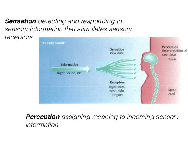 """a report on sensation and perception 2012-1-21 and sensation • what is the  and each step of the perception process  but, rather, of your own internal sensations when you report """"seeing"""" a tree,."""