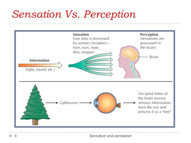Image result for sensation and perception