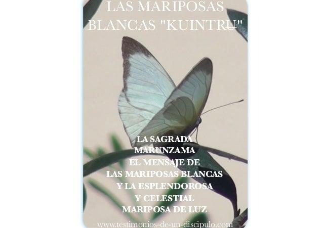 Las Mariposas Blancas Kuintru La Sagrada Marunzama El Mensaje De