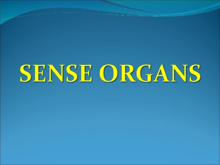 an overview of sense organs Use this mini-lesson to introduce students to sense organs give students a general overview of touch, taste, and smell students will learn that the nose, tongue.