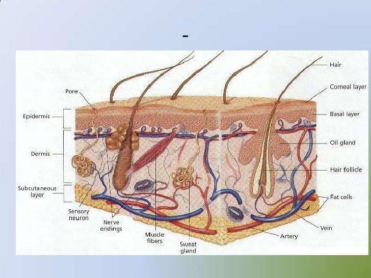 Sense Organs 12875004 in addition Sense Organs 12875004 in addition Sense Organs 12875004 besides Sense Organs 12875004 besides Roof Of Mouth Diagram. on sense organs 12875004