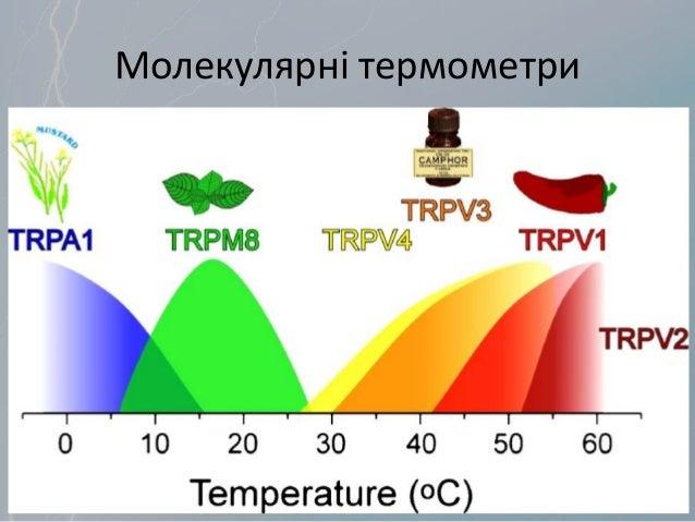 Молекулярні термометри