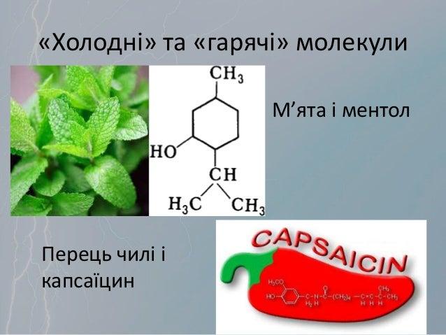 «Холодні» та «гарячі» молекули М'ята і ментол Перець чилі і капсаїцин