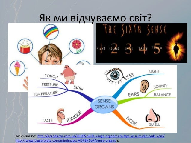 Як ми відчуваємо світ? Позичено тут: http://poradumo.com.ua/16005-skilki-vsogo-organiv-chuttya-ye-u-lyudini-yaki-voni/ htt...
