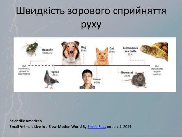 Швидкість зорового сприйняття руху Scientific American Small Animals Live in a Slow-Motion World By Emilie Reas on July 1,...