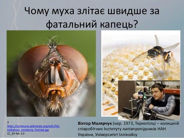 Чому муха злітає швидше за фатальний капець? Віктор Малярчук (нар. 1973, Тернопіль) – колишній співробітник Інституту напі...