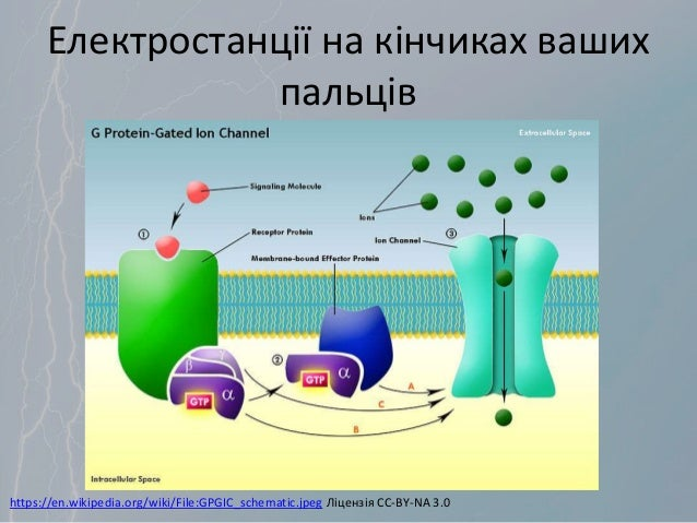 Електростанції на кінчиках ваших пальців https://en.wikipedia.org/wiki/File:GPGIC_schematic.jpeg Ліцензія CC-BY-NA 3.0