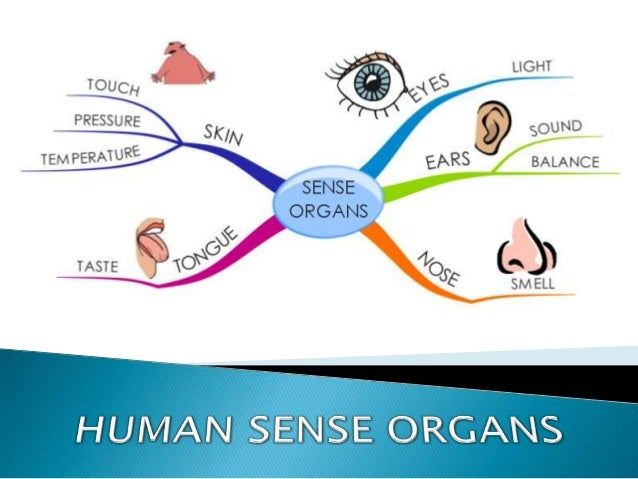       The perception of everything you respond to in the environment is made possible by sensory systems. Specialized n...