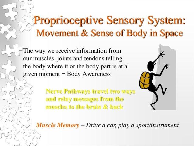 Sensory Processing Making Sense Of The Missing Piece