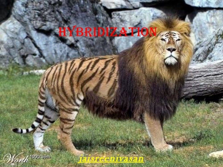 HYBRIDIZATION jaisreenivasan