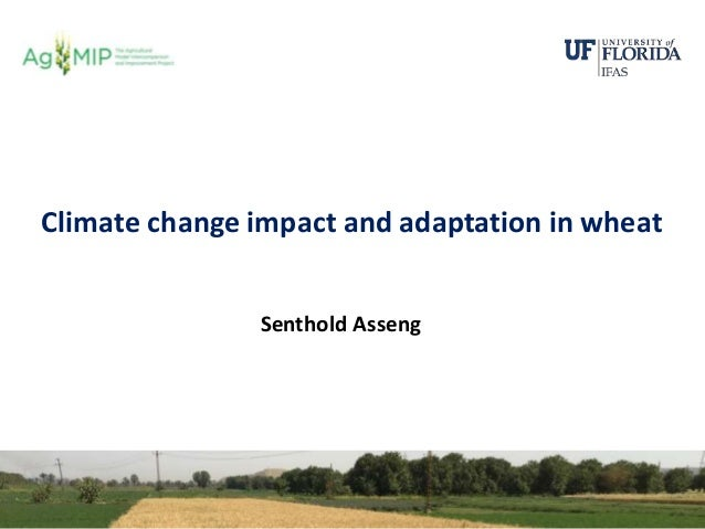Senthold Asseng, Climate change impact and adaptation in wheat, Workshop on Novel Research Dimensions in Modeling Climate ...