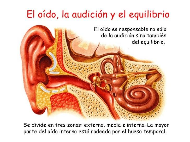 El oído es responsable no sólo de la audición sino también del equilibrio.  El oído, la audición y el equilibrio Se divide...