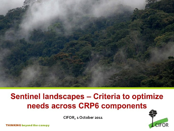 CIFOR, 1 October 2011THINKING beyond the canopy