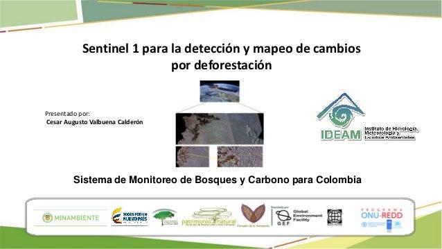 Sistema de Monitoreo de Bosques y Carbono para Colombia Sentinel 1 para la detección y mapeo de cambios por deforestación ...