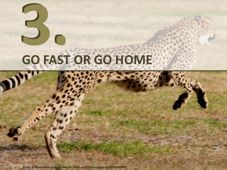 GO FAST OR GO HOMEFOCUS: Increase your conversion• Google uses speed as a search ranking  factor for the most competitive ...